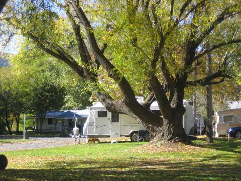 Tumbarumba Creek Caravan Park - Accommodation NT