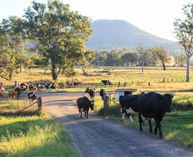 Tommerups Dairy Farmstay - Accommodation NT