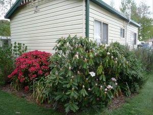 Jenolan Caravan Park - Accommodation NT