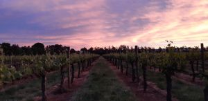 Milawa Vineyard Views - Accommodation NT