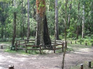 Six Mile Creek campground - Accommodation NT