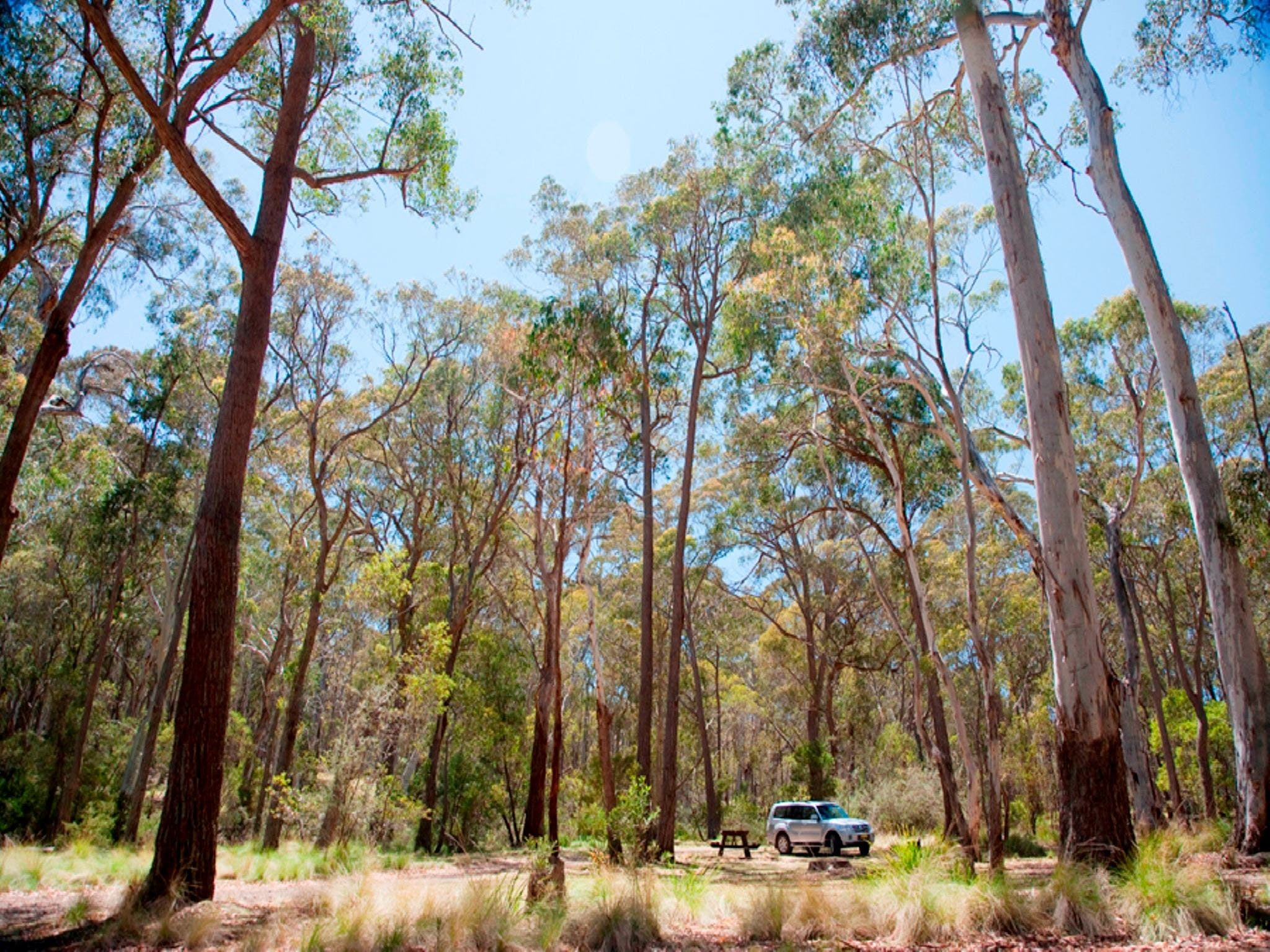 Coolah Tops National Park Camping - Accommodation NT