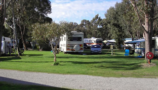 Pinjarra Caravan Park - Accommodation NT