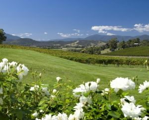 Balgownie Estate Vineyard Resort and Spa - Accommodation NT