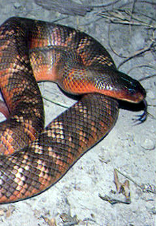 Armadale Reptile  Wildlife Centre - Accommodation NT