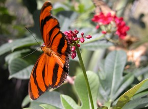 Butterfly Farm - Accommodation NT
