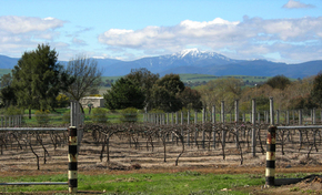 Buller View Wines - Accommodation NT