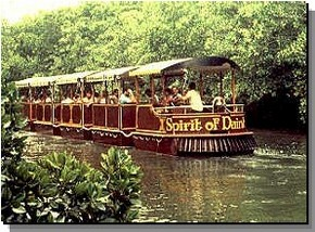 Daintree Rainforest River Trains - Accommodation NT