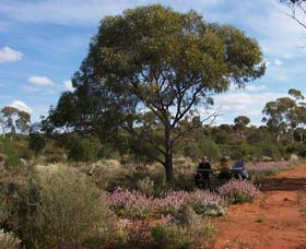 Karlkurla Bushland Park - Accommodation NT