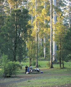 Big Brook Arboretum - Accommodation NT