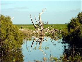 Bool Lagoon Game Reserve and Hacks Lagoon Conservation Park - Accommodation NT
