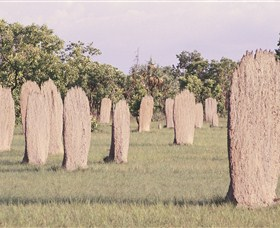 Magnetic Termite Mounds - Accommodation NT
