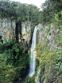 Gondwana Rainforests of Australia - Accommodation NT