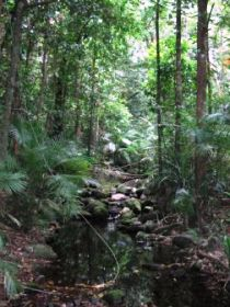 Mossman Gorge Rainforest Circuit Track Daintree National Park - Accommodation NT