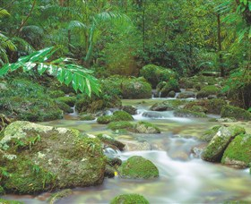 Mossman Gorge Daintree National Park - Accommodation NT