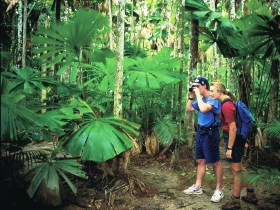 Mount Sorrow Ridge Trail Daintree National Park - Accommodation NT