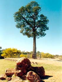 Robbers Tree - Accommodation NT