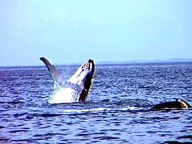 Whale Watching - Accommodation NT