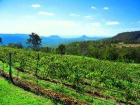 Preston Peak Wines - Accommodation NT