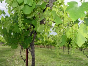Holland Wines - Accommodation NT
