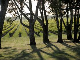 Henry's Drive Vignerons - Accommodation NT