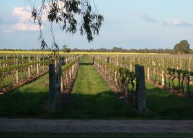 Water Wheel Vineyards - Accommodation NT
