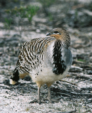 Yongergnow Australian Malleefowl Centre - Accommodation NT