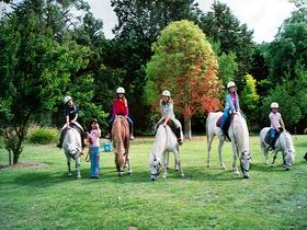Limestone Coast Horseriding - Accommodation NT