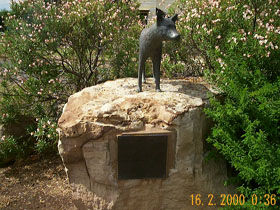 Dingo Statue - Accommodation NT