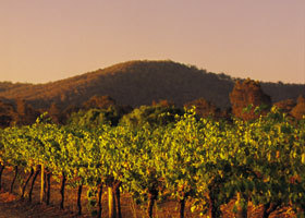 Taltarni Vineyards - Accommodation NT