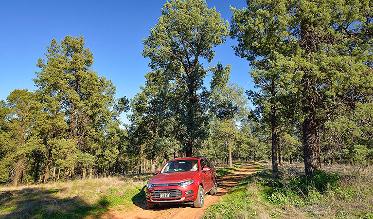 Forest drive - Accommodation NT