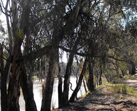 Mia Forest Drives Narrandera - Accommodation NT