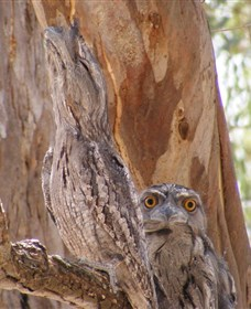 Bird Watching - Accommodation NT