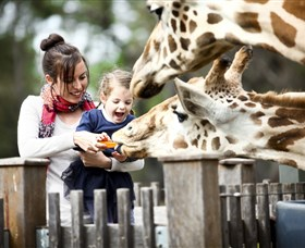 Taronga Western Plains Zoo Dubbo - Accommodation NT