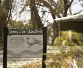 Kindra Forest - Accommodation NT