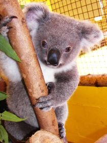Cooberrie Park Wildlife Sanctuary - Accommodation NT