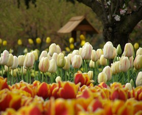 Tulip Top Gardens - Accommodation NT