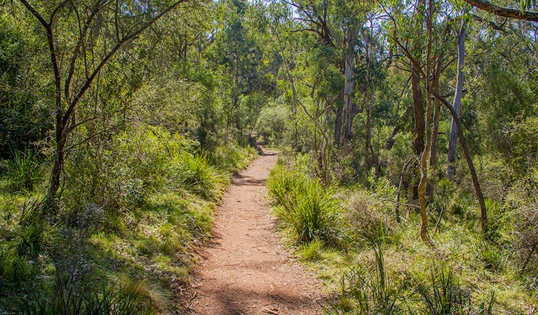 Mares Forest Creek walking track - Accommodation NT