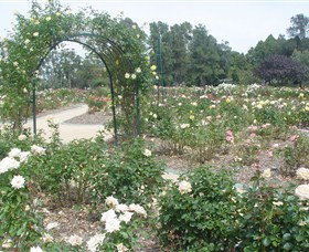 Victoria Park Rose Garden - Accommodation NT