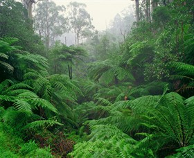Tarra Bulga National Park - Accommodation NT