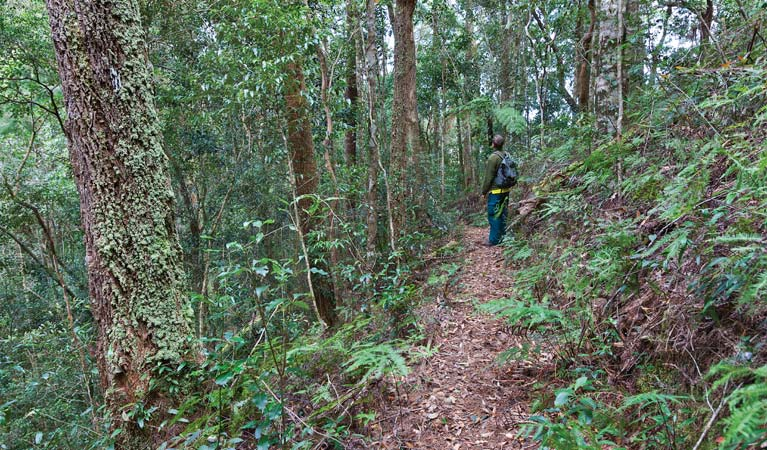 Blackbutt walking track - Accommodation NT