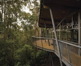 Tarkine Forest Adventures - Dismal Swamp - Accommodation NT