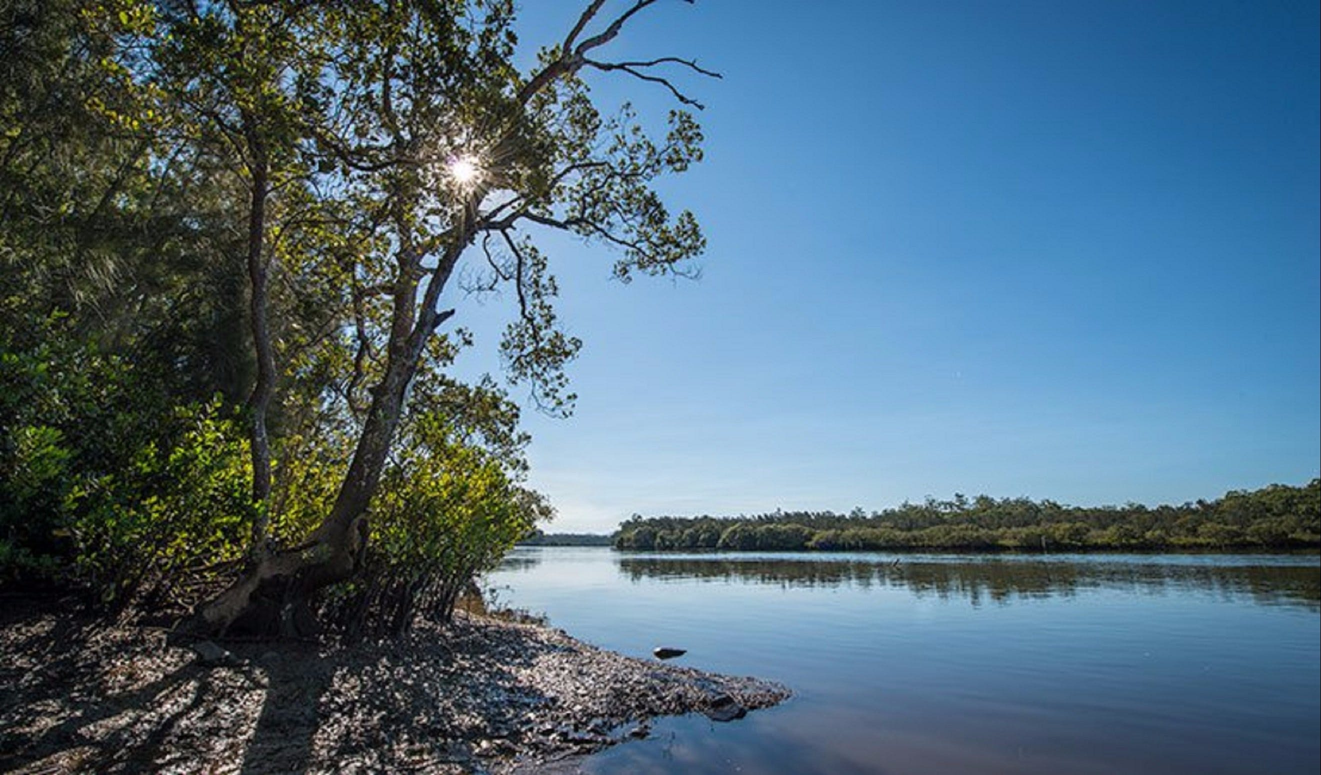 Karuah River National Park and Nature Reserve - Accommodation NT
