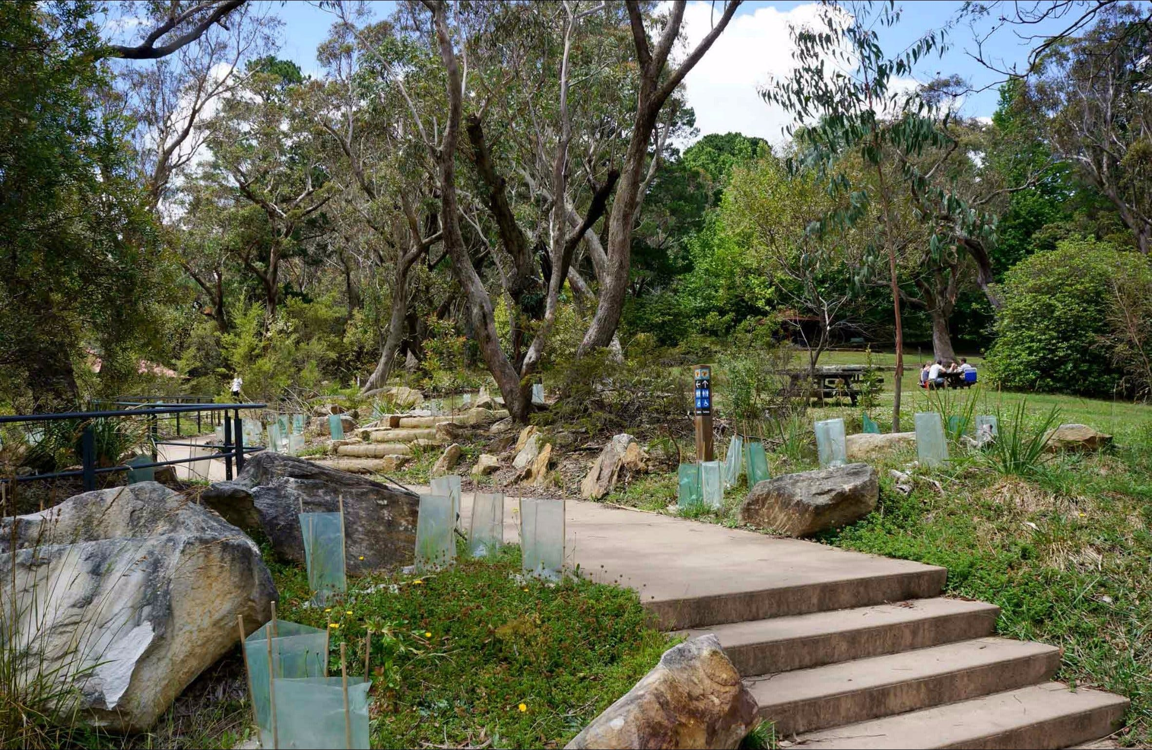 Wentworth Falls picnic area - Accommodation NT