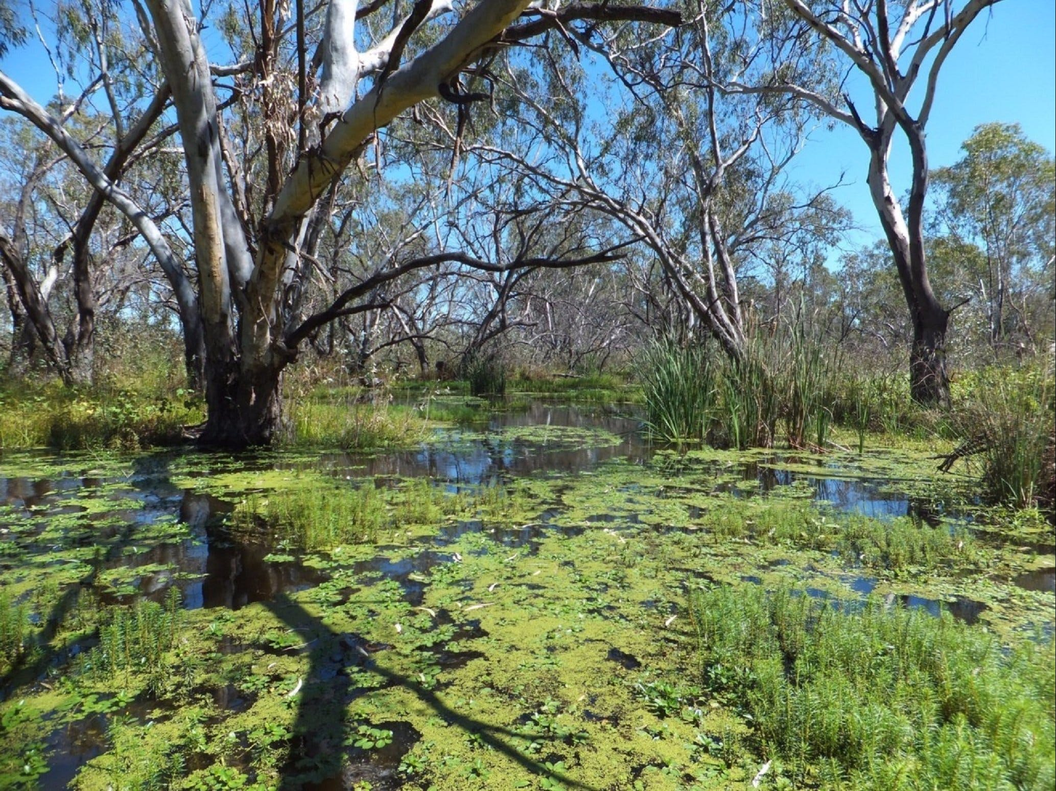 Macquarie Valley Trails - Accommodation NT