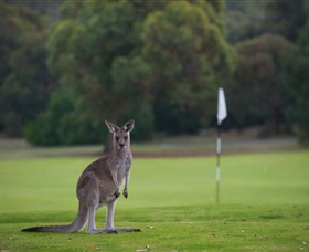 Anglesea Golf Club - Accommodation NT