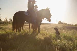 Balonne Cutting Horse Futurity - Accommodation NT