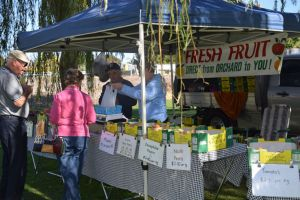 Corowa Rotary Federation Festival Market - Accommodation NT