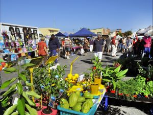 Maclean Community Monthly Markets - Accommodation NT
