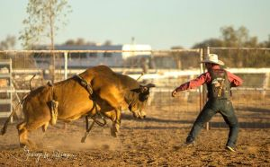 Walgett Charity Bushman's Carnival Rodeo and Campdraft - Accommodation NT